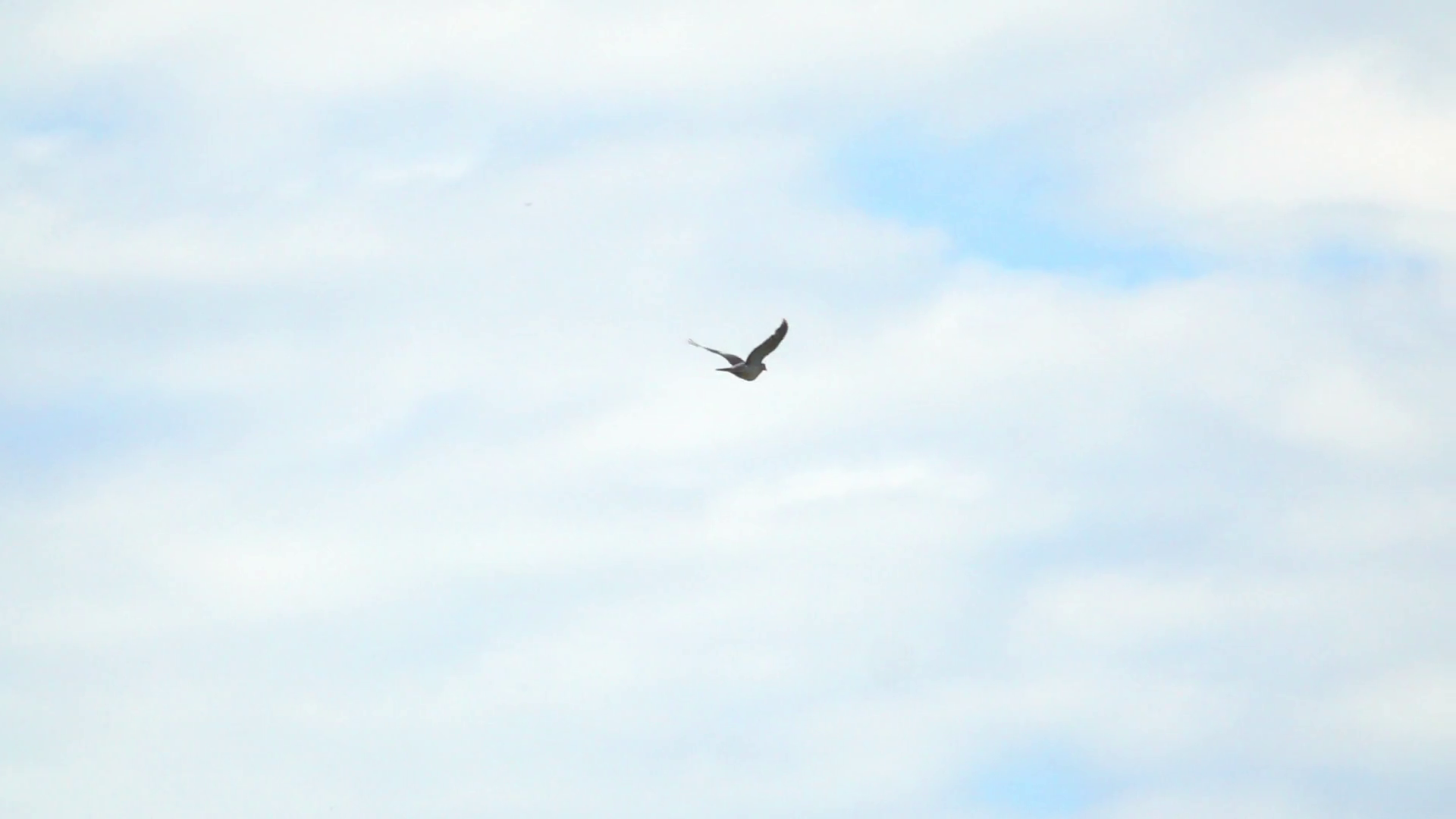 one-bird-flying-in-empty-sky-nature-background-with-wildlife_r09fknvge_thumbnail-full01